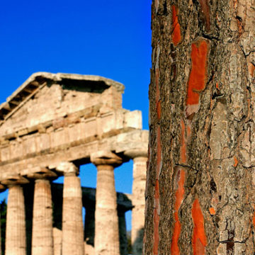 Paestum scavi